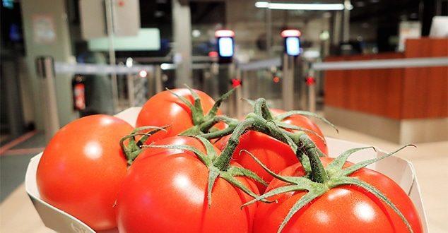 Tomaten können im Handgepäck mitgenommen werden!